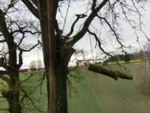 Baumpflege/Gartenbau  Kölnberger