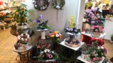 Susannes bunte Welt Blumen, Ballons und schöne Dinge