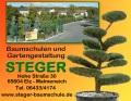 Logo Baumschule und Gartengestaltung  Michael Steger
