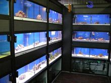 Aquaristik & Zoo Singer Süß- und Meerwasser Aquarien