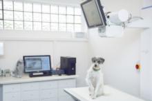 Tierarztpraxis Dr. med. vet. Jessica Sieg