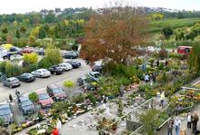 Döring GbR Gartengestaltung u. GartenBaumschule