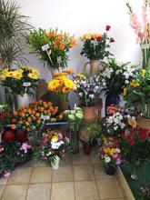 Blumen Ruzza