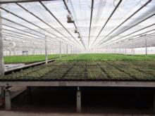 Gartenbaubetrieb H.-Jürgen Witt & Partner oHG