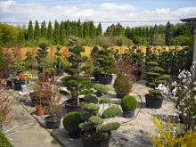 Baumschule und Gartengestaltung  Michael Steger