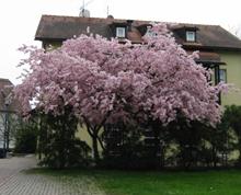 Oskars Pflanzenmarkt GmbH