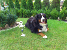 lesAmi  Reit-Fahr-Hundesport