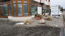 Ulrich Klottwig Garten und Landschaft Inhaber Rico Grumbt