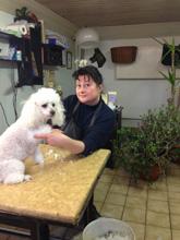 Hundesalon Kästner Eleonore