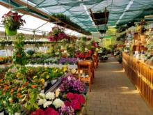 Gärtnerei Bauer Gartenbau-Floristik