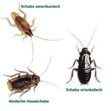 Schädlingsbekämpfung Hans Reitenspies