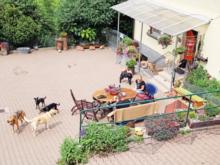 Tierpension Falterhof
