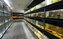 Aquaristik & Animal World