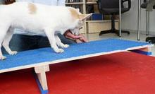 Praxis für Hundephysiotherapie & Hundeosteotherapie Sonja Voelcker