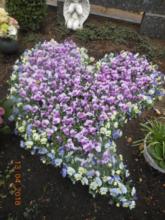 Blumen Lessle