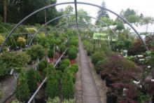 Ketzer Baumschulen-Gartengestaltung