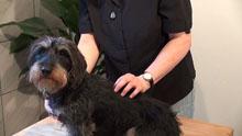 Akupunkt-Massage nach Penzel für Mensch, Pferd und Hund
