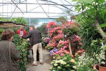 Blumen im Fachkauf Hermann Jetter GbR