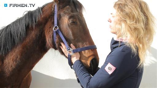 Videovorschau Tierarztpraxis  Dr. med. vet. Daniela Camphausen