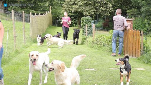 Filmreportage zu BfdH Bewegung für den Hund Ralf Selbach