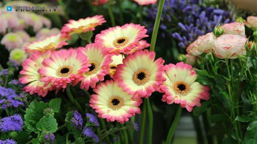 Videovorschau Annas Blumen