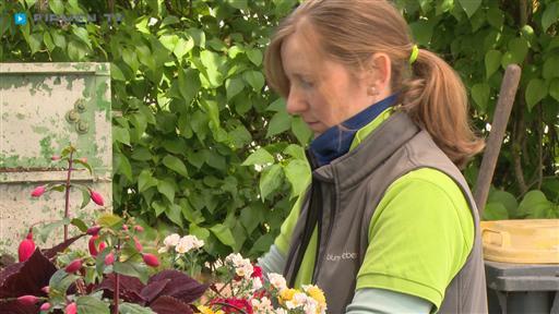 Videovorschau Blumen Eber