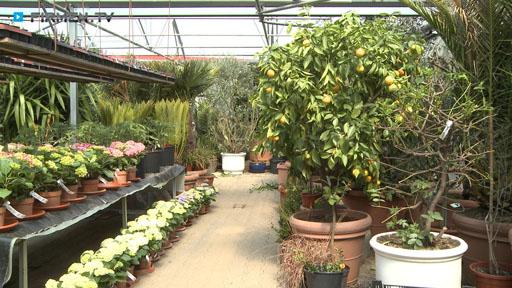 Videovorschau Blumen im Fachkauf Hermann Jetter GbR