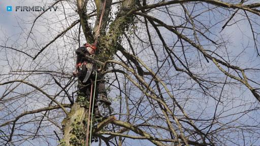 Videovorschau Riechmann Baumpflege