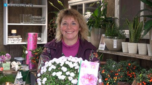 Videovorschau Blatt & Blüte Blumenfachgeschäft
