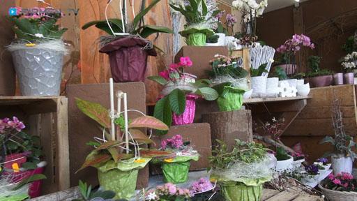 Videovorschau Blumen Schweiger Inh. Martina Hein