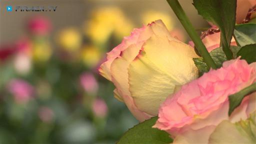 Filmreportage zu Ingrids Blumenhaus  Floristik
