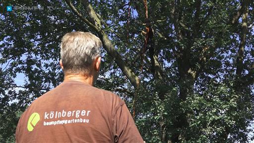 Videovorschau Baumpflege/Gartenbau  Kölnberger